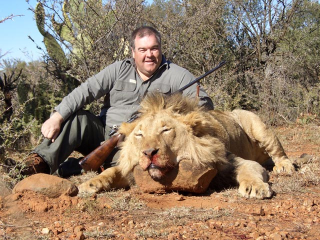 Mr Greg Hill Australia With Lion Taken In South Africa With Custom Built 318 Westly Richards With Open Sights At 20m And Woodleigh 330 350gr Weldcore Round Nose Soft Nose Bullet