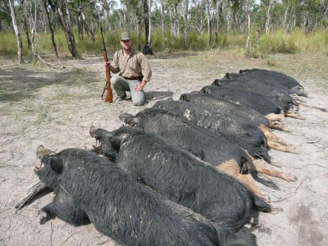 Mr Samuel Duhoux Belgium With 10 Wild Boar Taken With 375 HH And Woodleigh 300gr Weldcore Round Nose Soft Nose Bullets